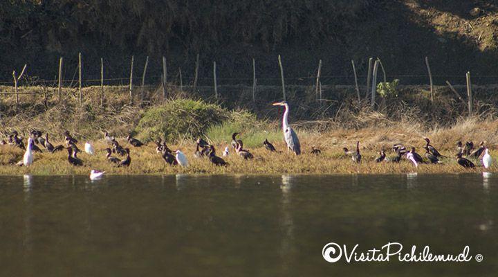 avistamiento de aves laguna de cahuil pichilemu