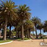 fenix palms, ross park, pichilemu