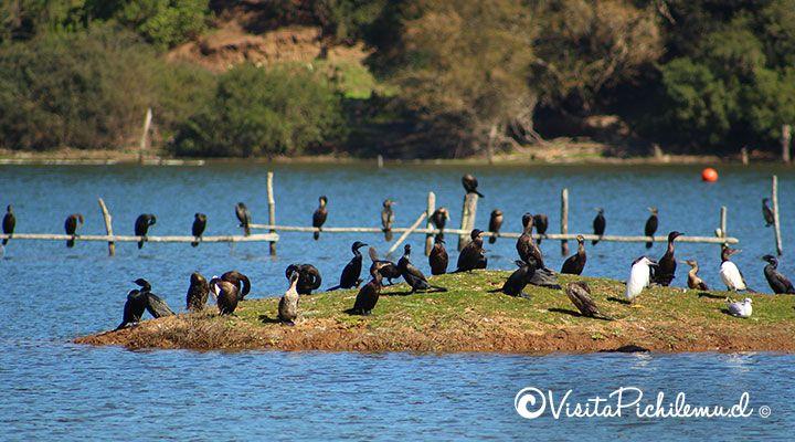 avistamiento de aves en la laguna de cahuil